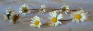 Daisy_chain
